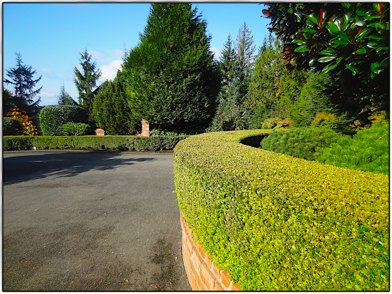 Persnickety landscaping driveway and hedge