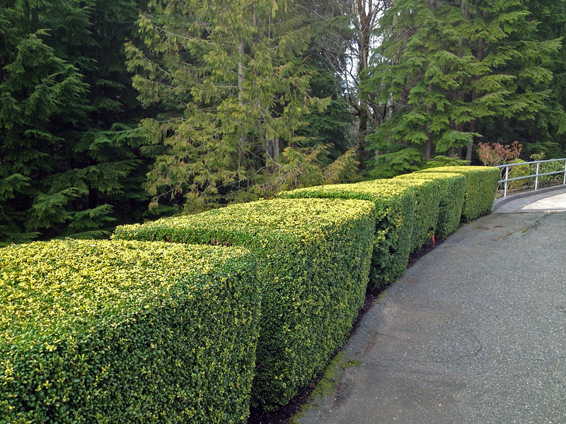 Persnickety fresh hedges
