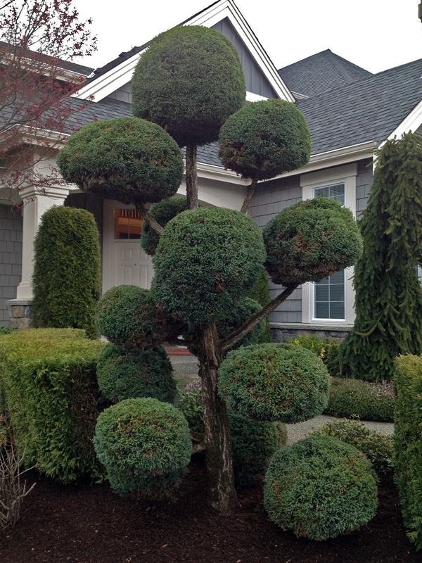 Persnickety round trimmed treee