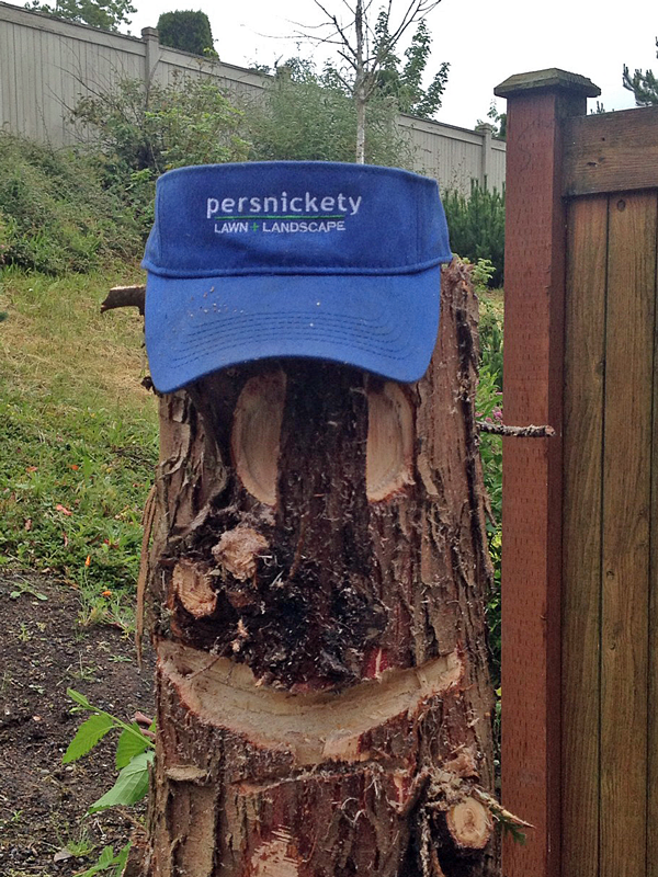 Persnickety stump wearing hat